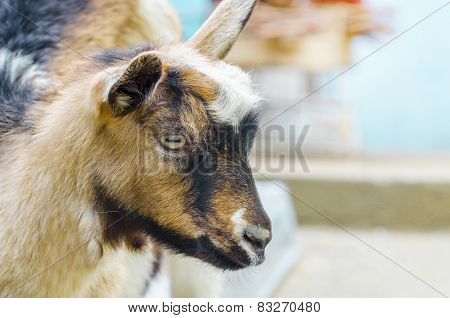 Little goat in the forest