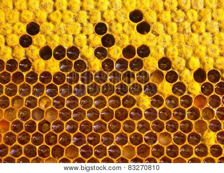 Honey, Nectar And Pollen