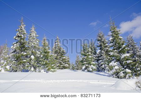 Winter landscape, trees covered with snow