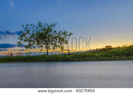 Road low view at dawn and a tree