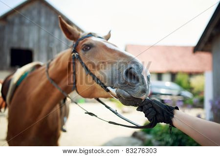 Horse Rider Pulls The Reins