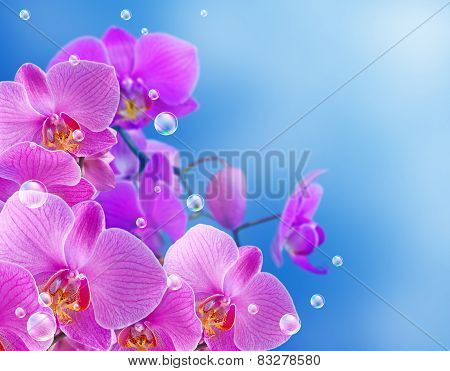 Orchid And Bubbles