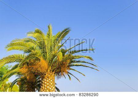 Palm tree on a clear blue sky, Hawaii