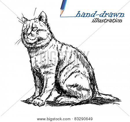 cat sketch illustration