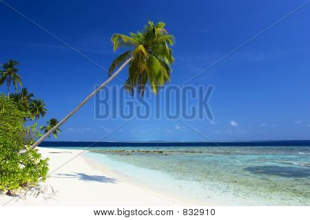 THE BEST BEACH WITH PALM TREE