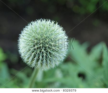 Round ball of flower