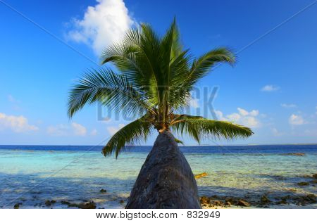 WONDERFUL BEACH WITH PALM TREE