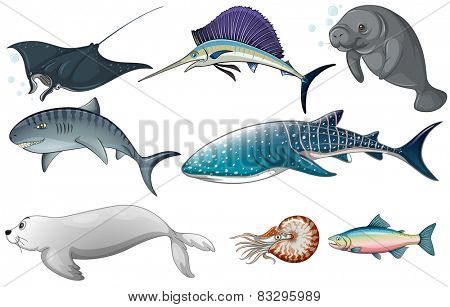 Illustration of different kind of ocean creatures