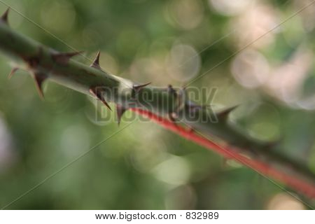 Sharp Thorns
