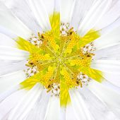 foto of symmetrical  - White Flower Center Symmetric Collage Made of Collection of Various Wildflowers - JPG