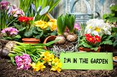 pic of flower pot  - Gardening tools and flowers in the garden - JPG