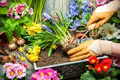 stock photo of tool  - Gardening tools and flowers in the garden - JPG