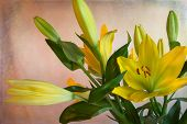 image of curvy  - Symmetrical beauty in curvy blooming yellow flowers - JPG