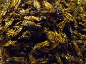 picture of cricket insect  - Crispy fried insects  are regional delicacies in many Asian countries like Thailand - JPG
