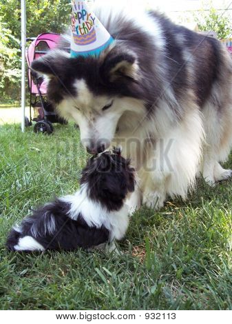 Big Dog Meet Little Dog