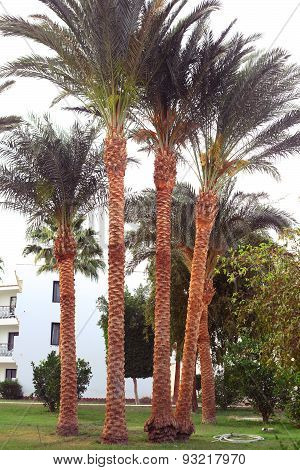 Beach Hotel Resort Exterior With Beautiful Tropical Garden With Palm Tree