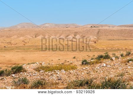 Negev Desert, Camels In The Background
