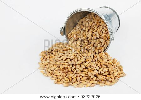 Barley Grains Spilling Out Of Bucket