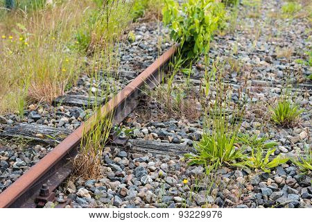 Rusty Rails And Varied Species Of Weeds
