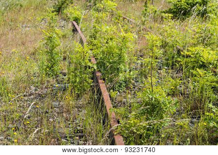 Young Trees And Rusted Rails