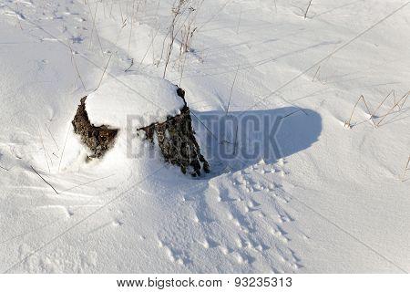 stump under snow