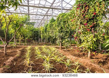 Interior of greenhouse with a variety of plants and flowers