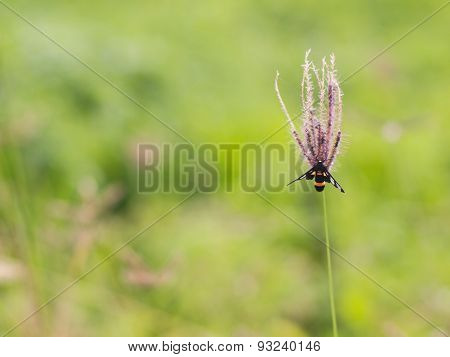 Insect On Flower Grass.