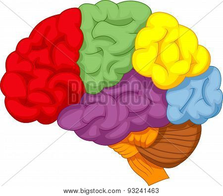 Cartoon colorful brain