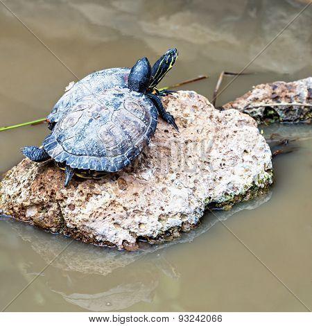 Turtles Or Tortoises