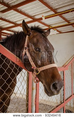 Horse In Barn Behind Cage