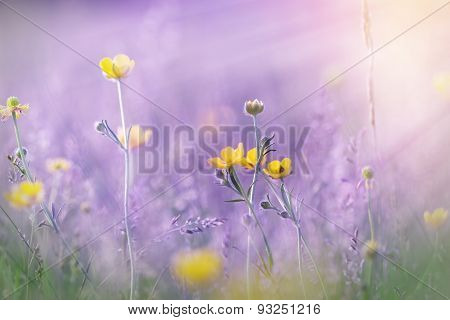 Yellow flowers in meadow illuminated by sun rays