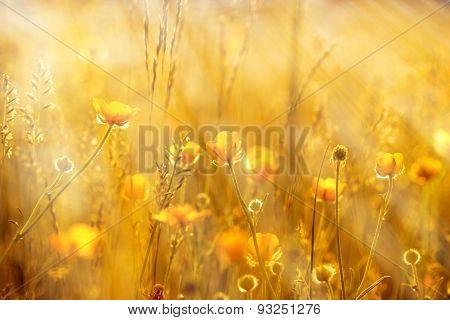 Yellow flowers lit by sun rays