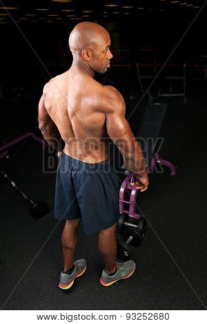 Muscular Back Shoulders and Triceps