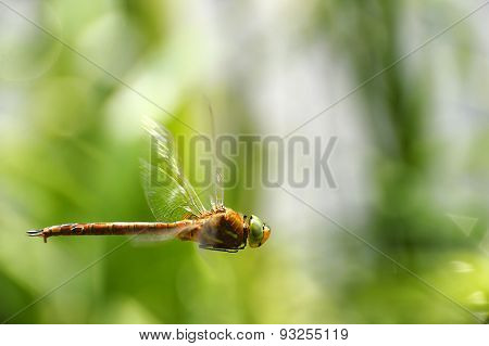 Dragonfly Close-up In Flight