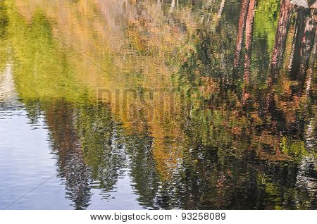 Reflection of nature in the water