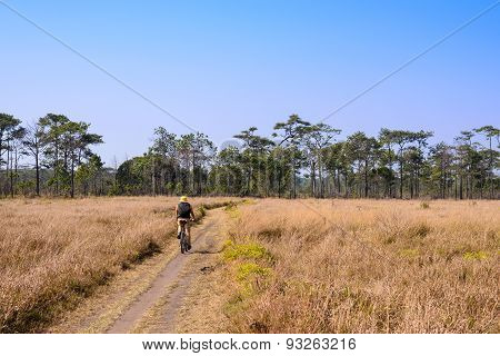 Cyclist Rides On A Gravel Road In The Middle Of A Pine Forest.