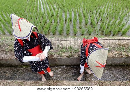 Japanese young girl planting rice