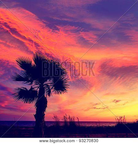 Almeria Cabo de Gata sunset pam trees in Retamar beach at Spain
