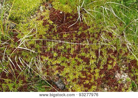 Natural carpet of green moss