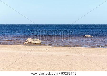 Sandy Coast Of The Sea Gulf With Big Stones