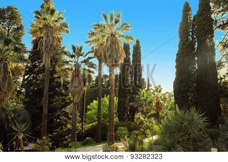 Walkway In A Beautiful Park With Palms And Thuyas