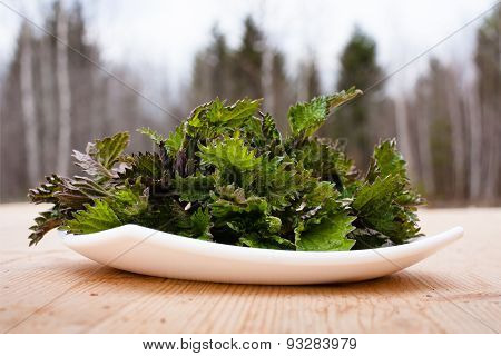 Fresh Nettle On The Wooden Table