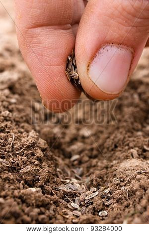 Hand Planting Seeds In Soil, Closeup