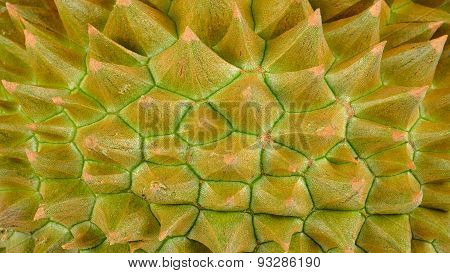 Close Up Durian For Background