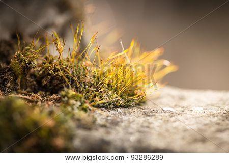 Macro Shot Of A Moss On A Rock