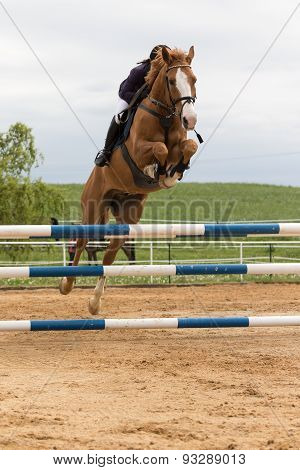 Horsewoman Hidden Behind A Horse's Head In High Jump