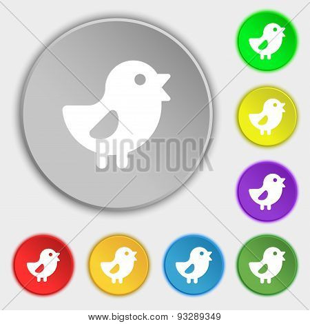 Chicken, Bird Icon Sign. Symbol On Five Flat Buttons. Vector