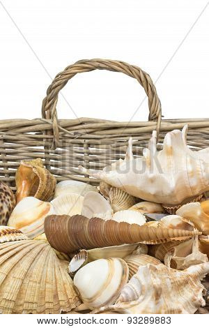 Seashells In Old Wicker Basket. Vertically.