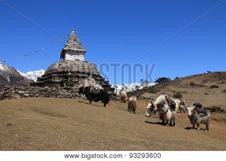 Yak Herd Carrying Goods And Stupa