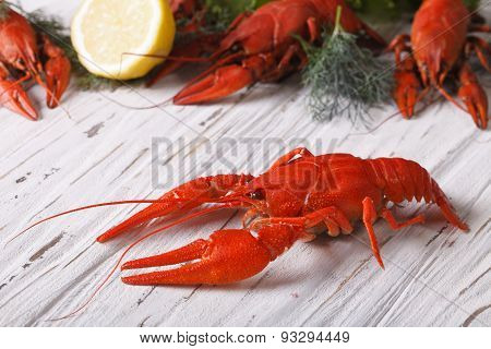 Crayfish Boiled With Lemon Close Up On A Table. Horizontal